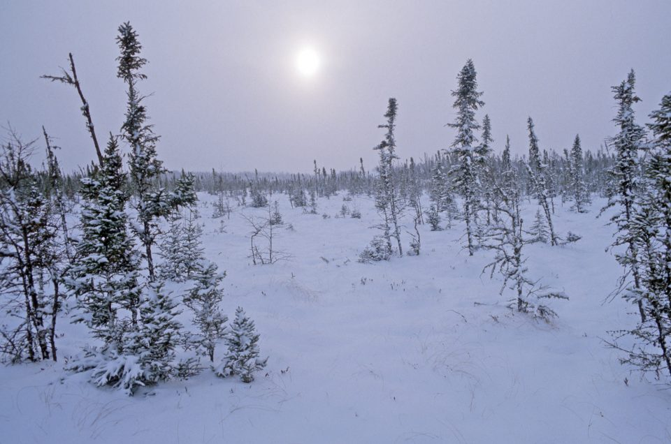 Boreal forest in winter, Taiga Biological station, Manitoba