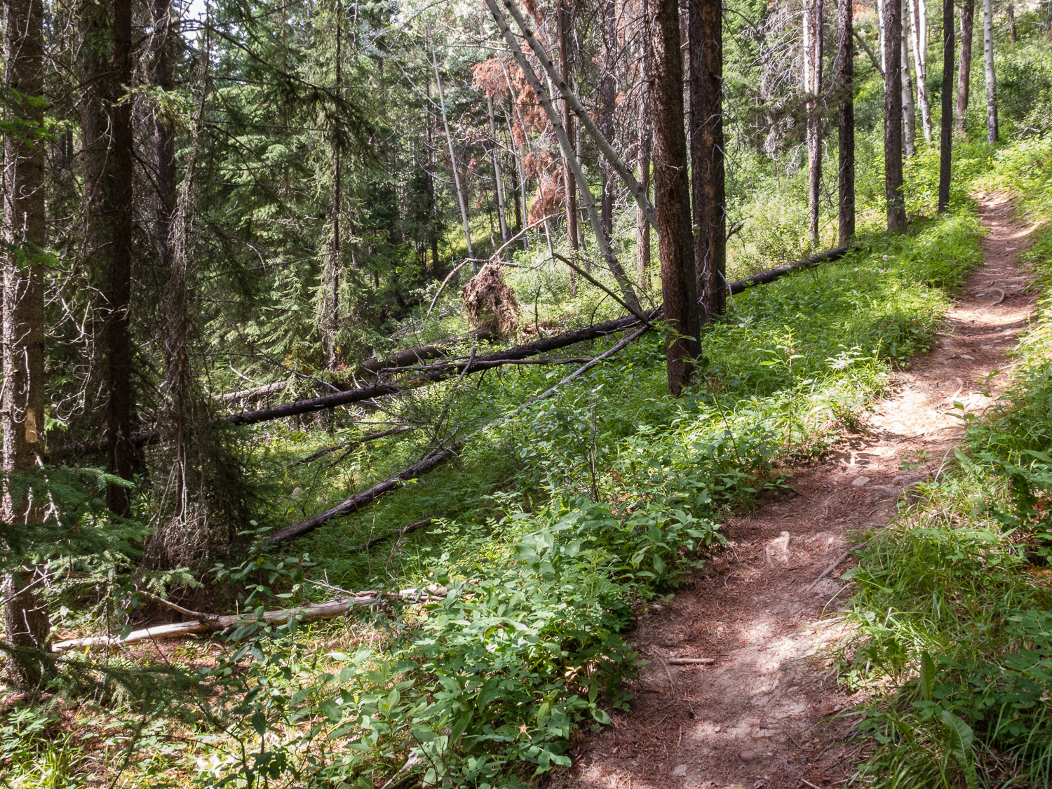 Start of old wagon road along Dorothy Trail, left of centre